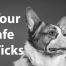 Keep Your Dog Safe From Ticks
